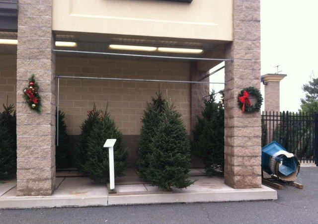 imagesevents9803Live-Christmas-Trees-Weavers-Ace-Hardware-At-Douglassville-JPG.jpe