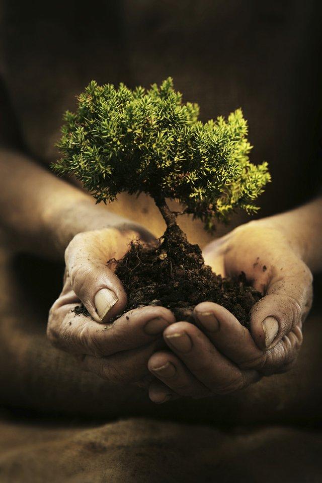 growing_tree_hand.jpg.jpe