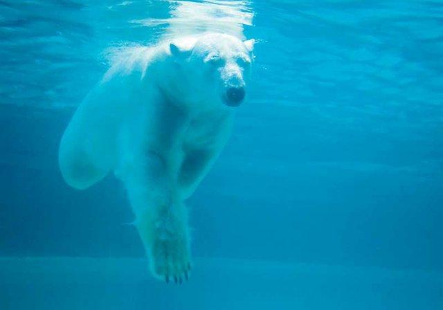 Pittsburgh_ZooPPG_Aquarium-Paul-Selvaggio-VisitPittsburgh.jpg