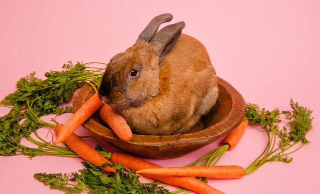 callie the bunny