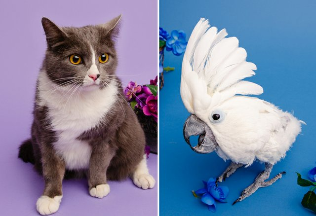 5th annual pet contest winners