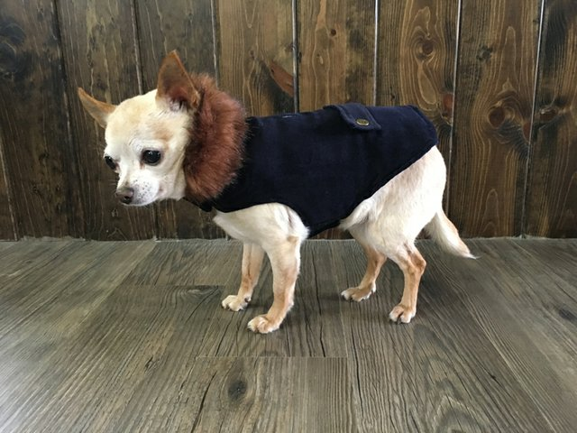 Velveteen Coat