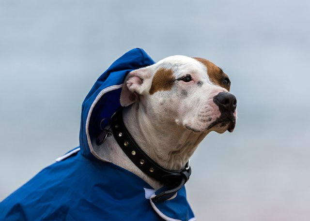 5 things to dress your dog