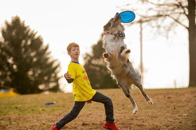 Frisbee Dog-7.jpg