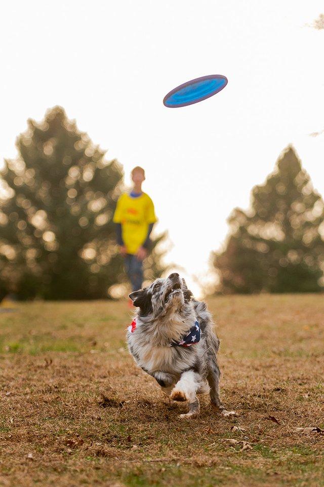 Frisbee Dog-5.jpg