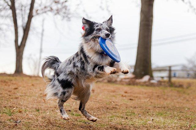 Frisbee Dog-3.jpg