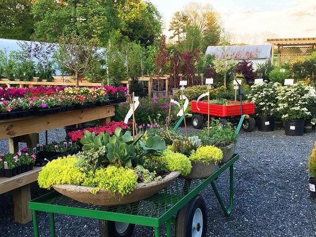 Ryeland-Gardens-pic1.jpg