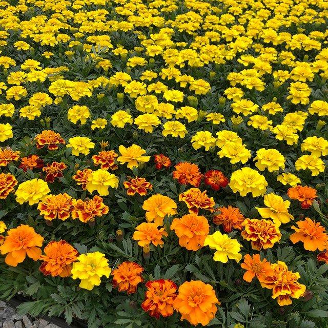 Esbenshades-Flower-and-Veggie-4-Packs.jpg