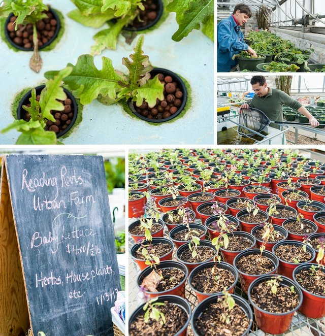 Farming-articlephotos.jpg.jpe