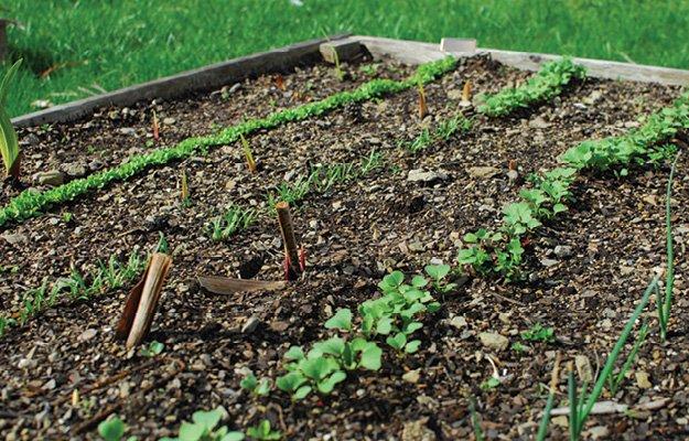 planting.jpg.jpe