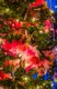 12319-Dec14LISJS5_2762.jpg.jpe