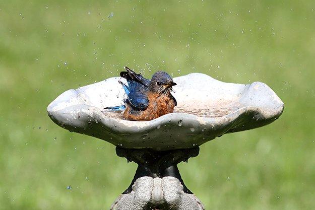 birdbath.jpg.jpe