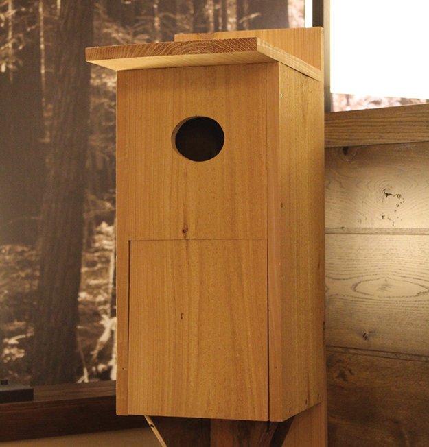 16593-Birdhouse_galleryIMG_7381.jpeg.jpe